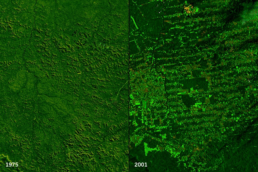 Landsat deforestation