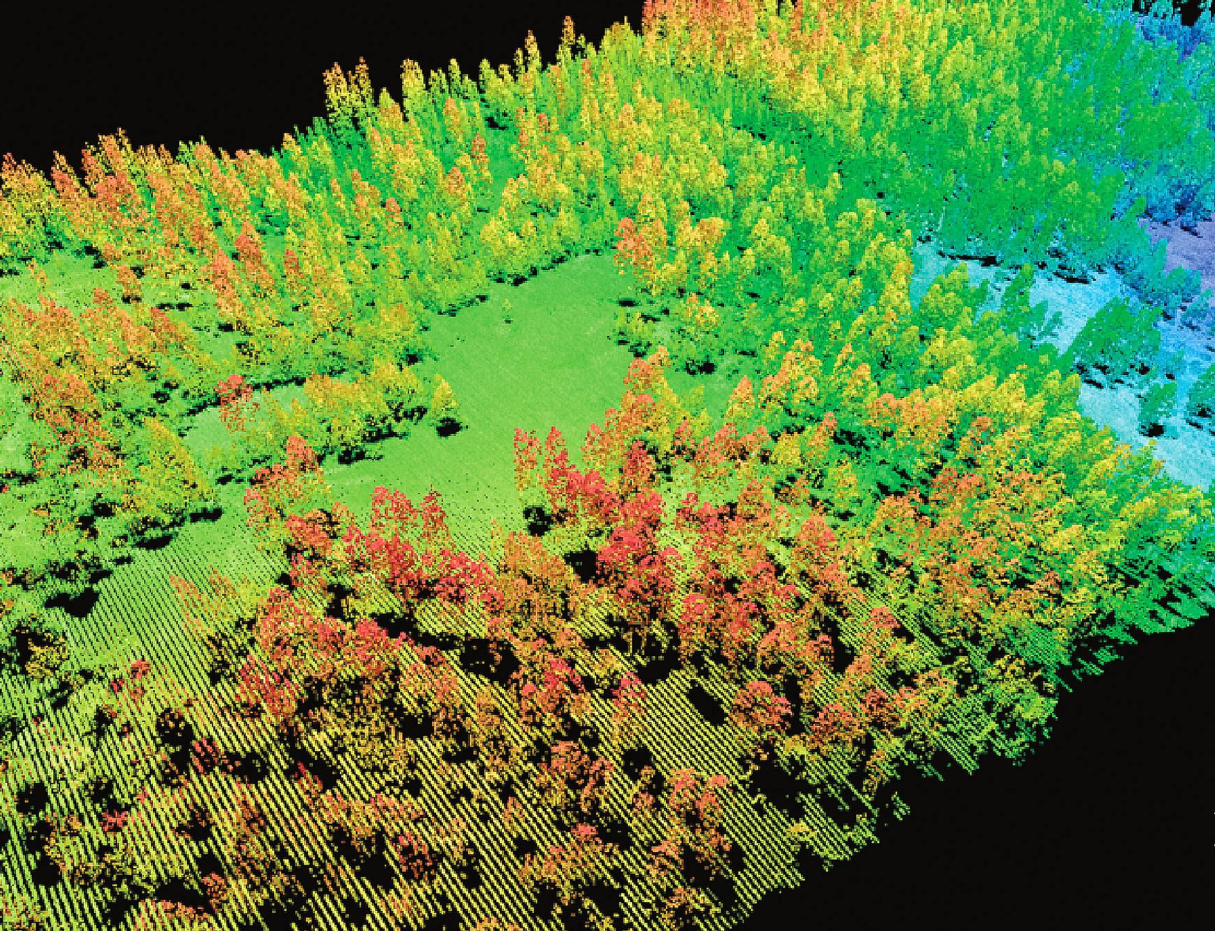 Collections of Lidar points show trees in the Sierra National Forest, where much of the research on remote sensing has occurred.