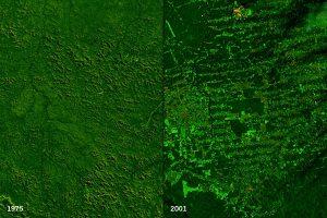 Landsat deforestation