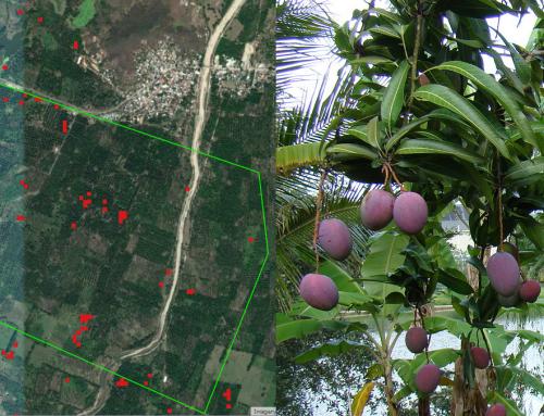 Cómo analizar el estado de cultivos con teledetección satelital