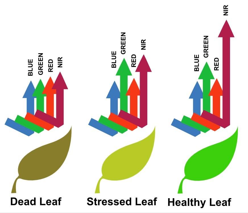 indice_vegetación