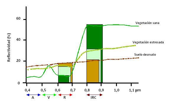 indice_vegetación1